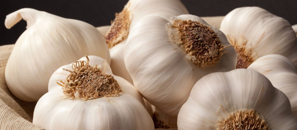 Porcelain Seed Garlic - Organic Seed Garlic for Sale