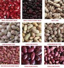 Dry Pinto Beans or Light Speckled Kidney Beans(Long Shape) Size 220-240 pcs