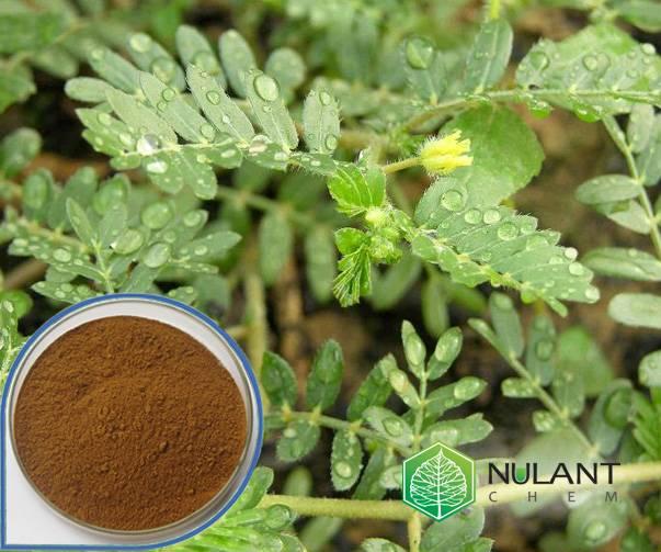 Tribulus terrestris extract saponins 90%