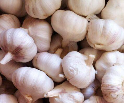 high quality  garlic
