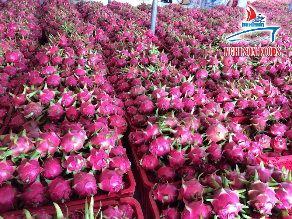Vietnam Fresh Dragon Fruit