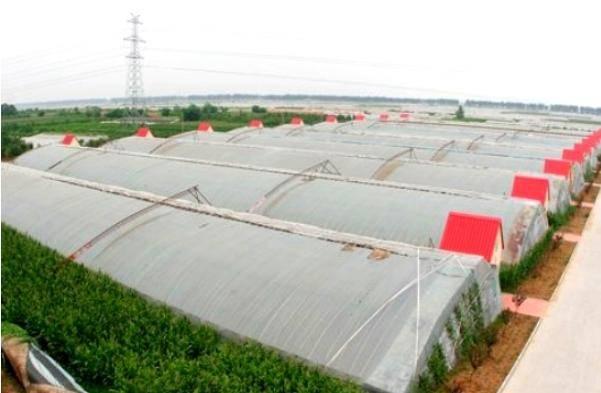 Solar Greenhouse (BZ-SG-1402)