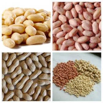100% raw bold peanuts/Java Peanuts/roasted and salted peanuts for sale