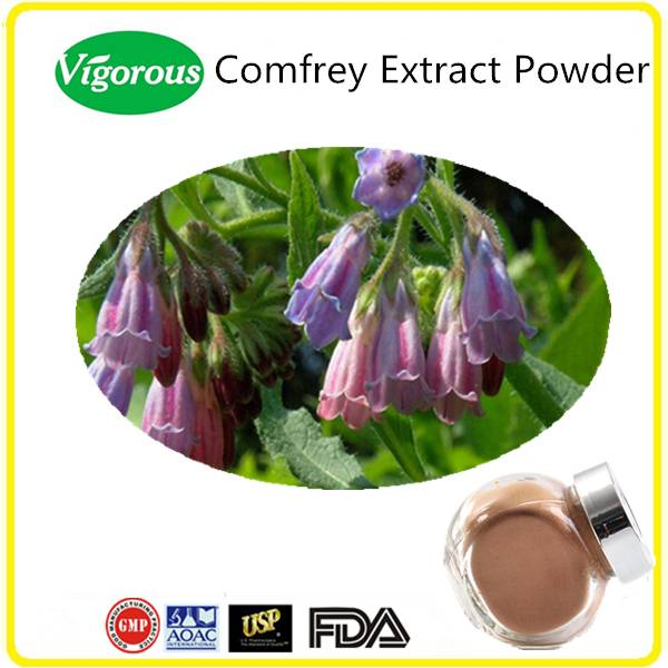 For Phamarceutical Use Comfrey Root Extract Powder
