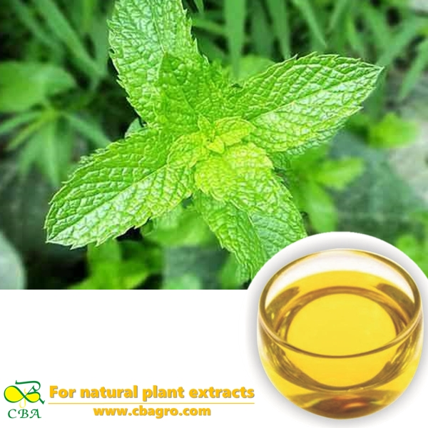 Bulk Peppermint Oil Peppermint Essential Oil Mint Oil at Sale Price