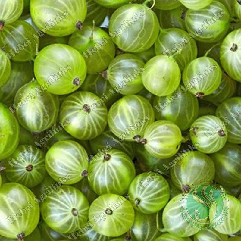 Agrilinks Frozen gooseberry