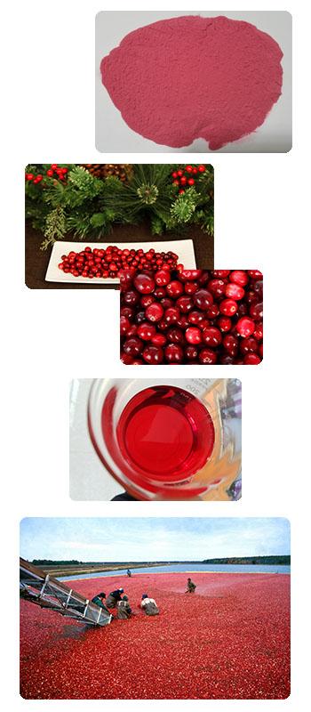 Organic cranberry extract proanthocyanidins 1%,10%,25%,40%