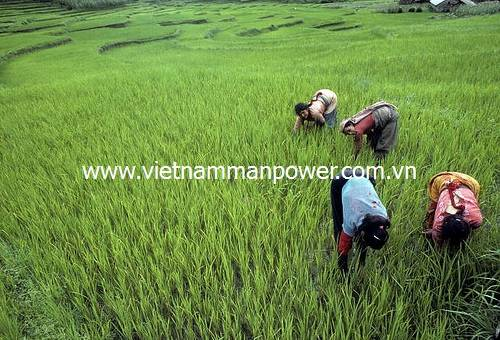 Providing agricultural labor from Viet Nam