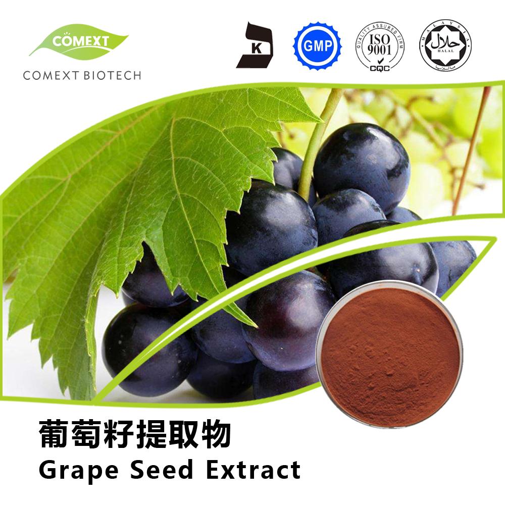 Grape Seed Extract 95% OPC Powder