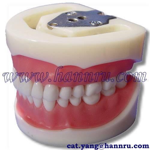Dental model PST-01 Standard Working Model - Hann Ru