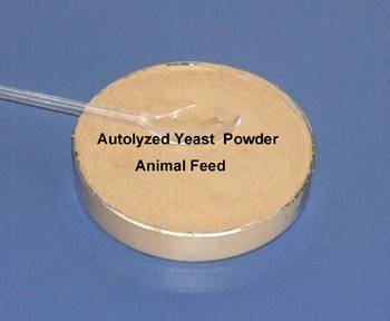 Autolyzed yeast for shrimp feed (best attractant )