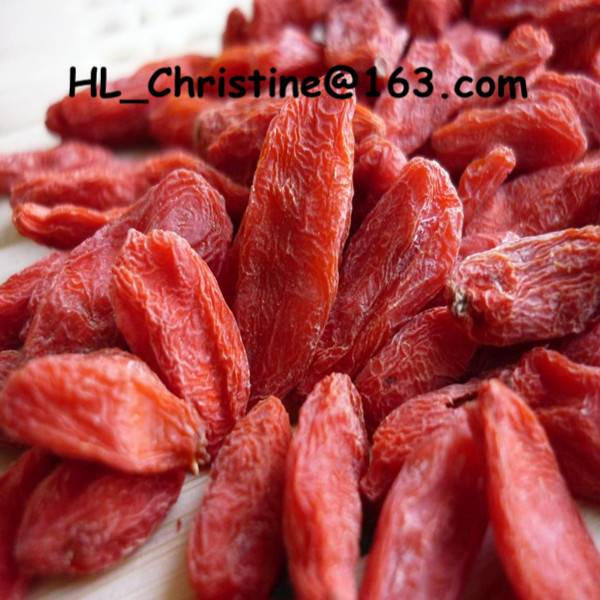 ningxia best quality goji berry