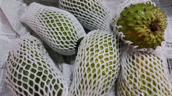 Soursop ( Graviola ) Fruit