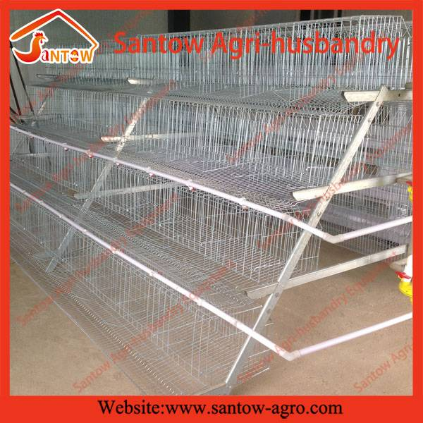 poultry farm A type automatic chicken layer cage