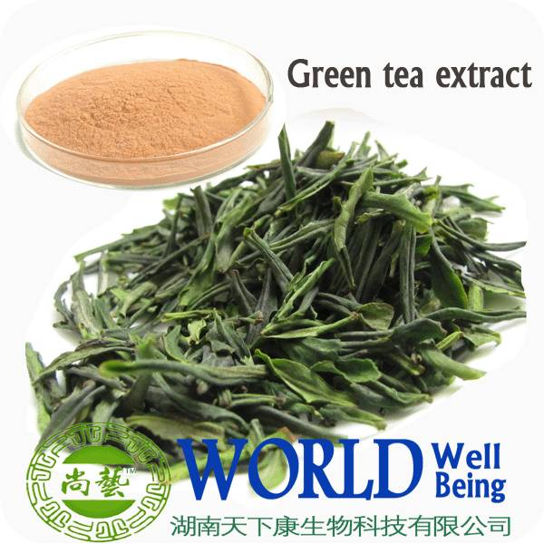 98% Tea Powder Tea Polyphenol Green Tea Extract EGCG
