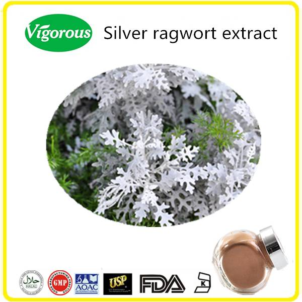 Health Natural Plant Extract Silver Ragwort Extract Powder