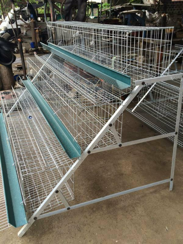 chicken layer cage
