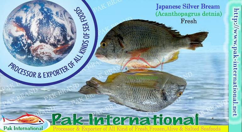 JAPANESE SILVER BREAM