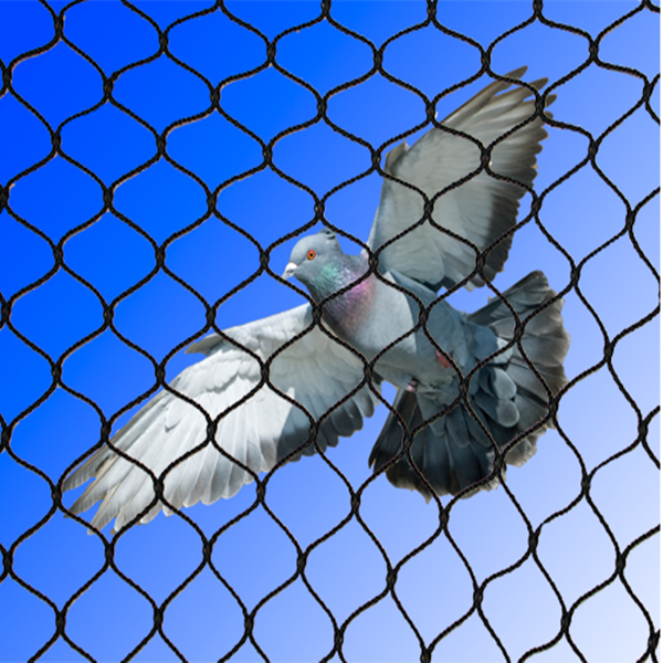 Anti Bird Netting Poultry Fencing Bird Barricade Netting