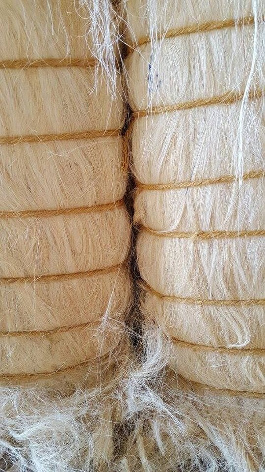 Sisal Fiber UG and SSUG Grade