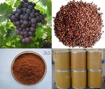 Antioxidant grape seed extract opc 95%