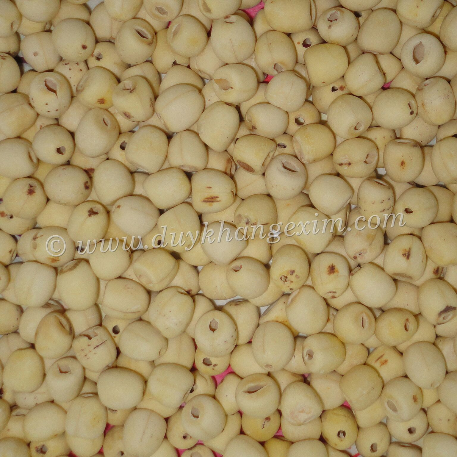 WHITE LOTUS SEEDS, BEST PRICE, HIGH QUALITY