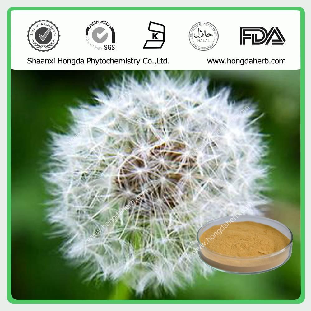 Dandelion Extract 100%pure powder 5:1,10:1, 20:1