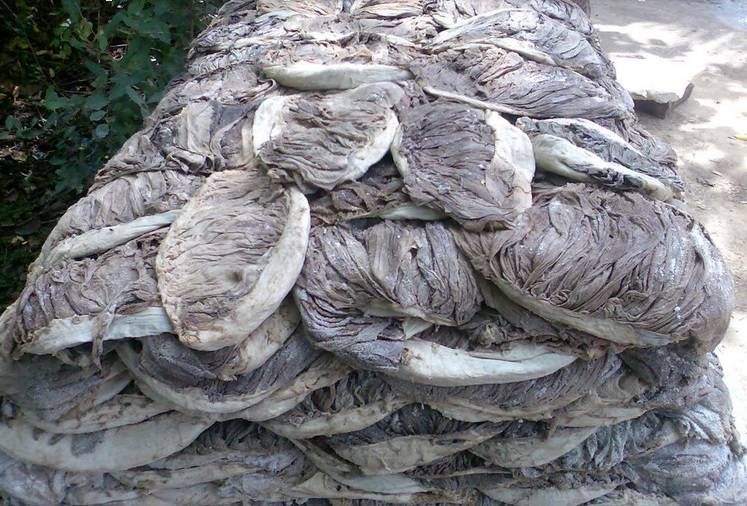 Salted beef Omasum dry and frozen for Sale