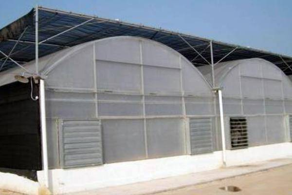 PC Sheet Greenhouse (BZ-PG-1402)
