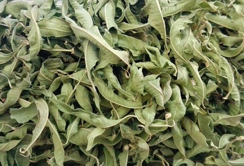 High Quality Dried Lemon Verbena Leaf