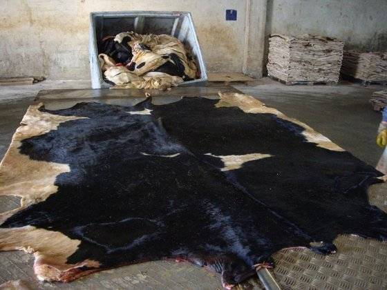 Dry and Wet Salted Cattle Hides