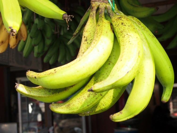 East Java Banana
