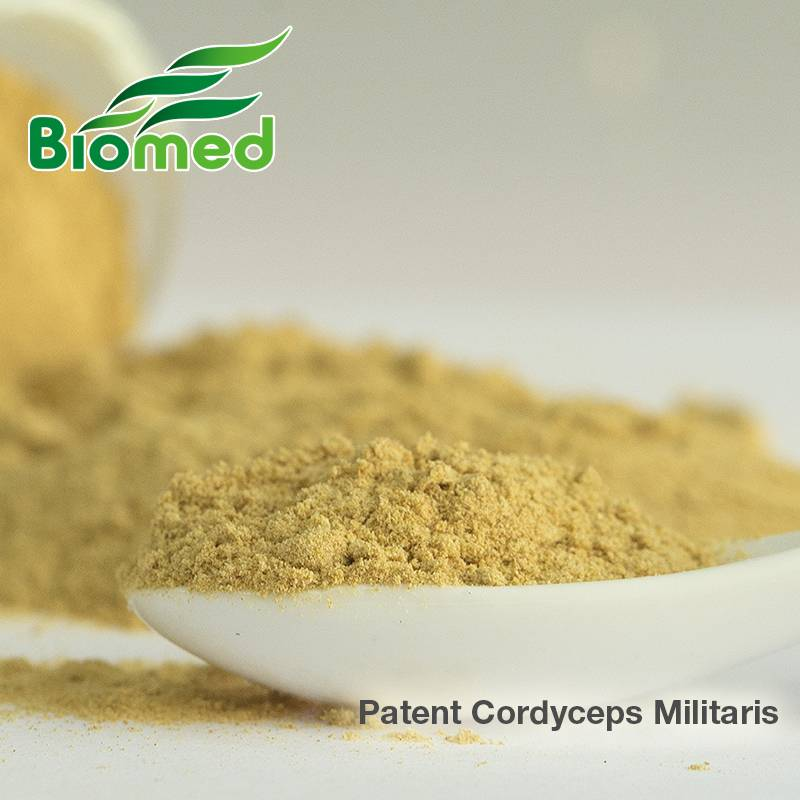 Best quantity Cordyceps Militaris Powder - plant extract