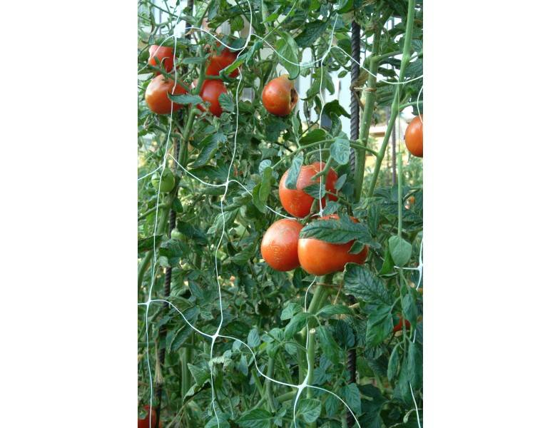Cheap tomato plant support net /tomato spial plant support