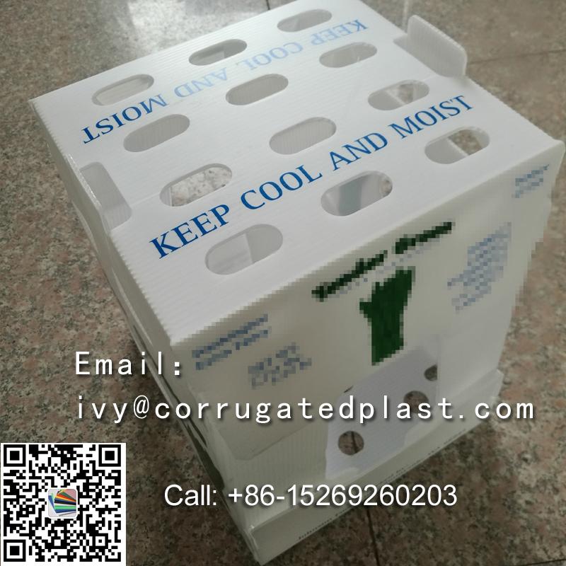 Asparagus Boxes,corrugated plastic boxes manufacturers,collapsible corrugated plastic boxes