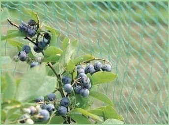 Agricultural Diamond Anti Bird Netting For Protecting Crop