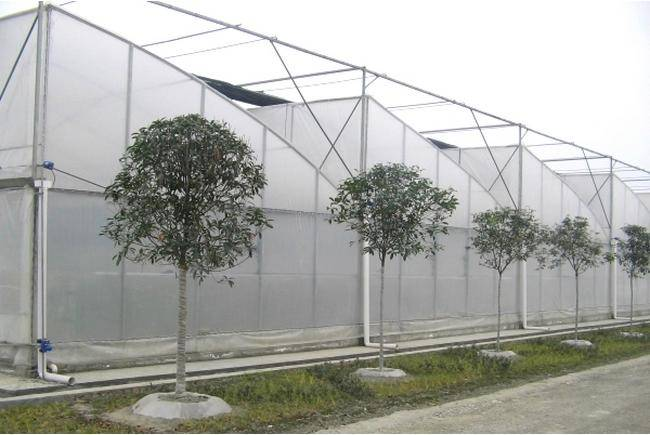 Plastic Film Covered Sawtooth Greenhouse for Sale