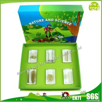 Preschool Educational Wheat Food Specimen Educationa Baby Toys