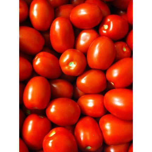 Fresh Tomatoes New crop