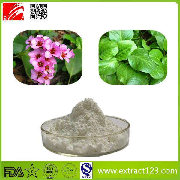 High Quality Purple Bergenia Extract