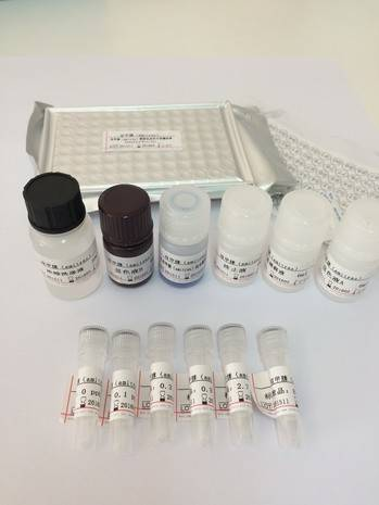 Ampicillin ELISA Test Kit(tissue and liver,honey)