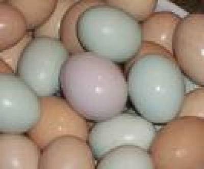 Parrot ,Ostrich Eggs