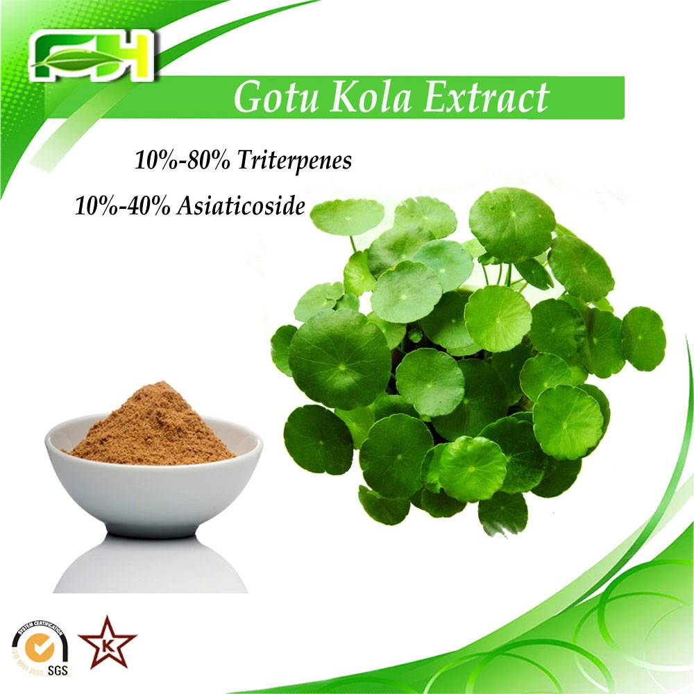 Factory supply Gotu Kola Extract