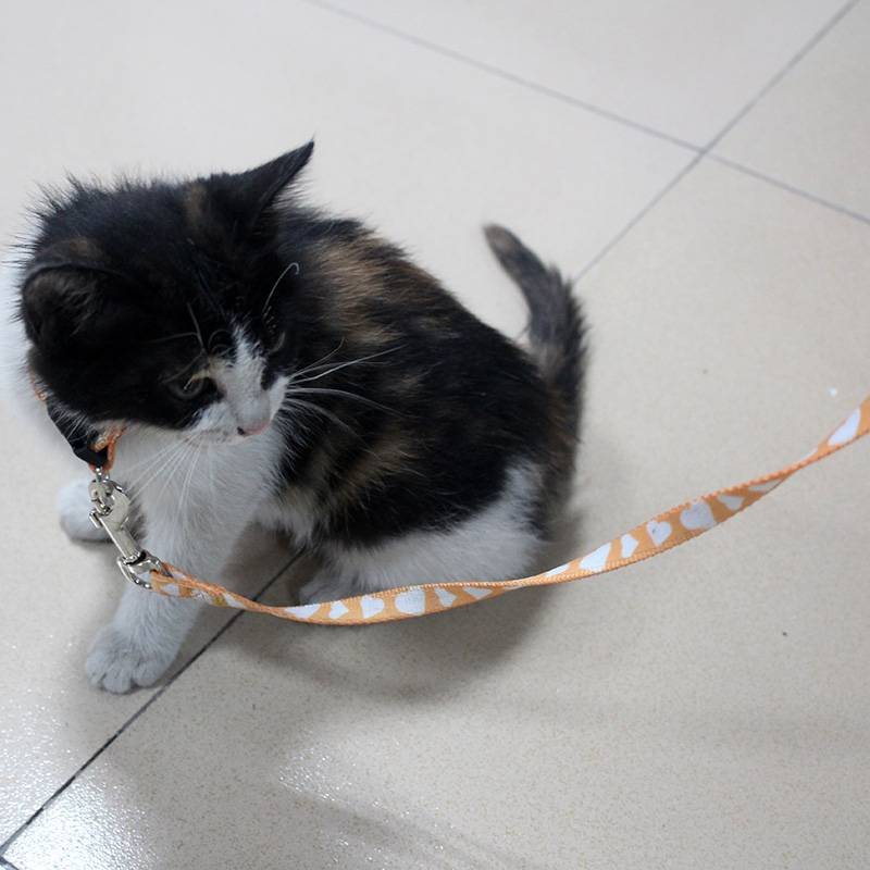 Manufacturer made polyester cat collar and leash