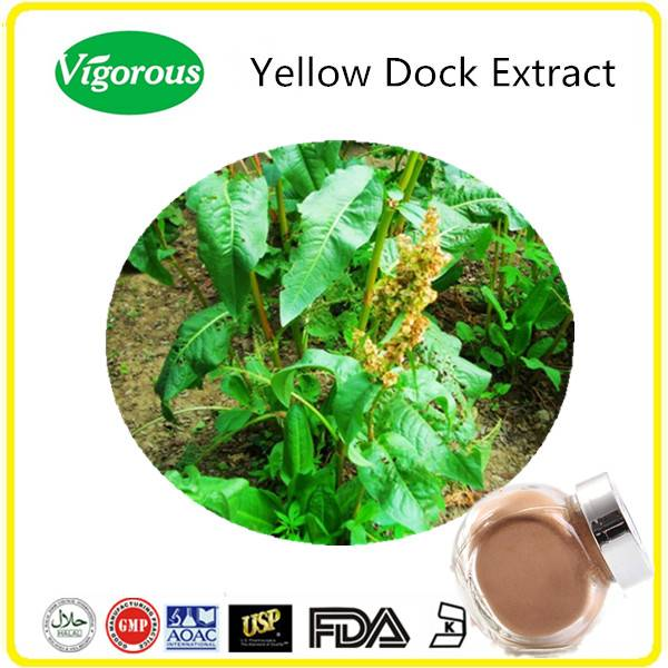 GMP manufacturer 10:1 yellow dock extract / free samples yellow dock powder