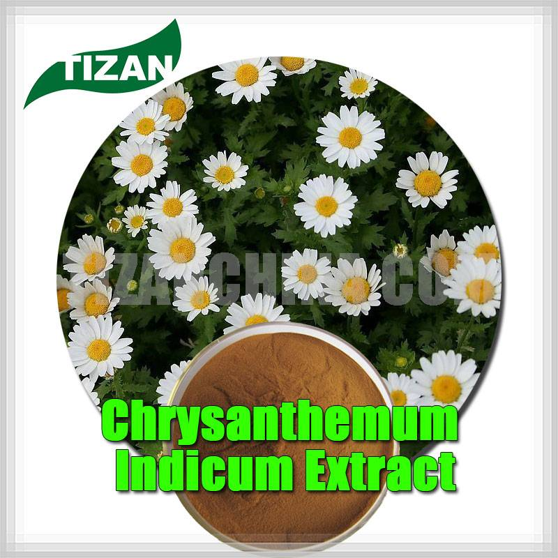 Chrysanthemum Indicum Extract