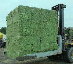 ALFALFA HAY - Double Compressed Big Bales - 14-16 % Protein - for Sale !