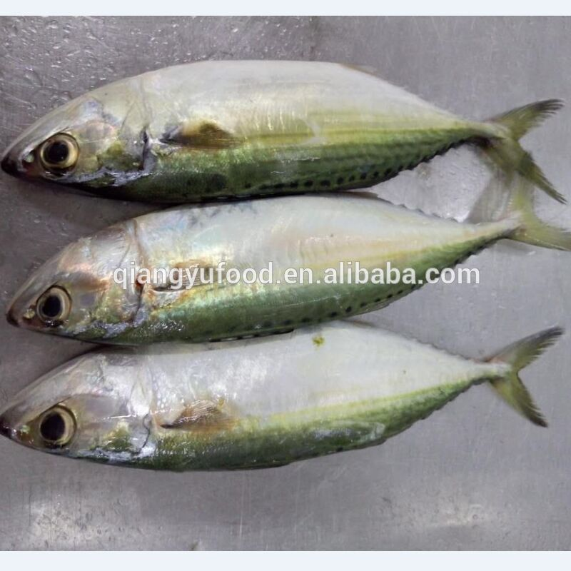 factory directly sale frozen seafood indian mackerle for Thailand