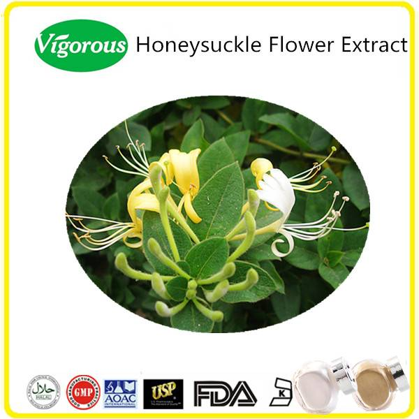 GMP manufacturer 5%~98% Chlorogenic Acid 10:1 pure natural honeysuckle flower extract