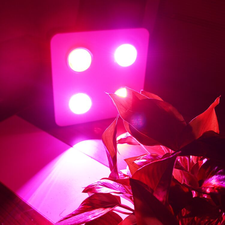 High Quality 400W COB LED Grow Light with Low Price